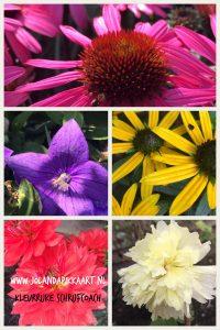 Kleur in je tuin en je boek